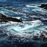 ¿El agua tiene consciencia?