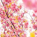 Disfruta a tope de la primavera sin alergias